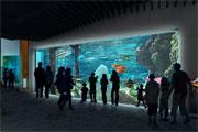PENETRON ADMIX Helps Launch New Tacoma Aquarium